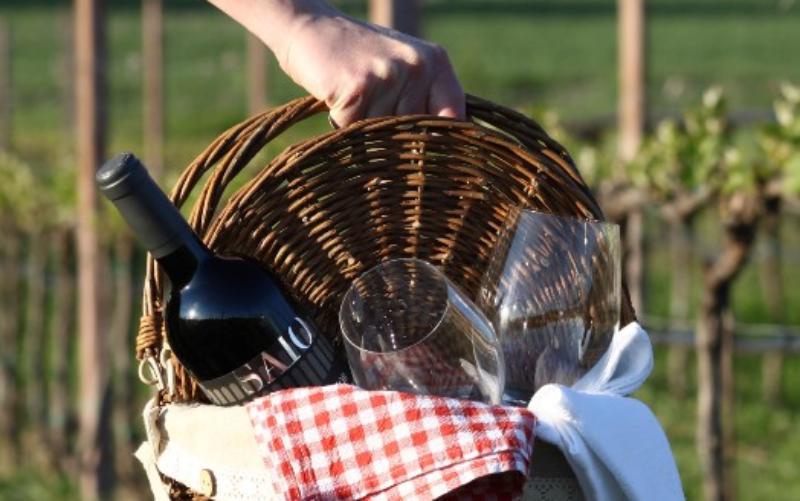 Un delizioso pic-nic tra i vigneti umbri assaporando vini e cibi locali dell'enogastronomia dell'Umbria