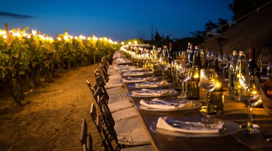 Cena in vigna e pic-nic: 7 esperienze suggestive